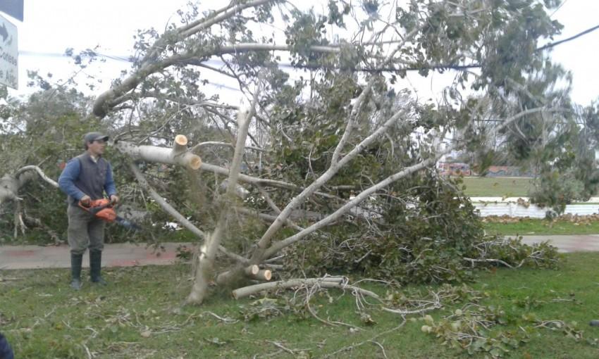 El viento provocó voladuras de techos, caída de árboles y corte genera