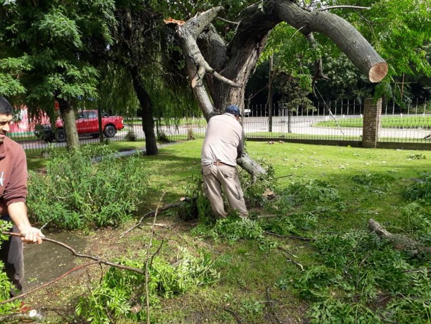 El viento provocó la caída de árboles