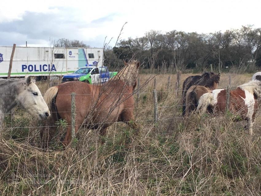Trasladaron al depósito judicial equinos que fueron encontrados suelto
