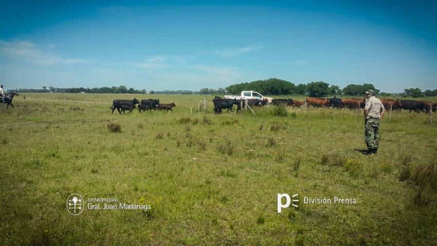 Desalojaron otro potrero usurpado del campo La Madrugada