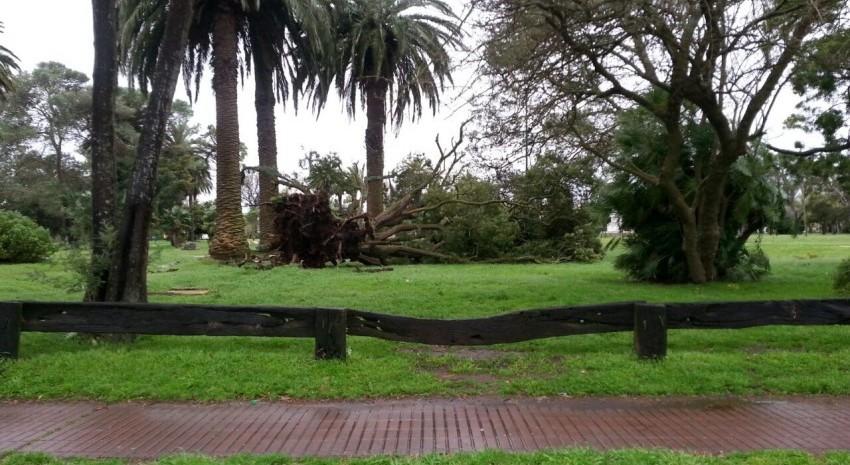 Arbol caído en el parque Anchorena