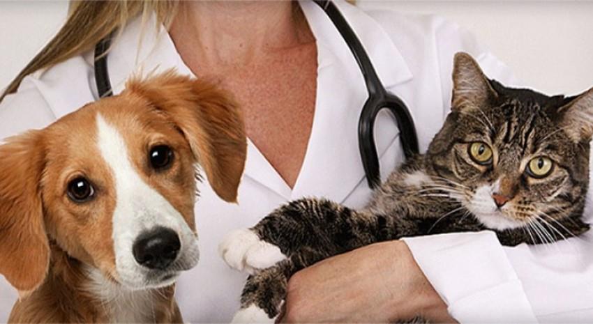 perros y gatos1
