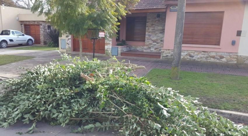 recoleccion de ramas