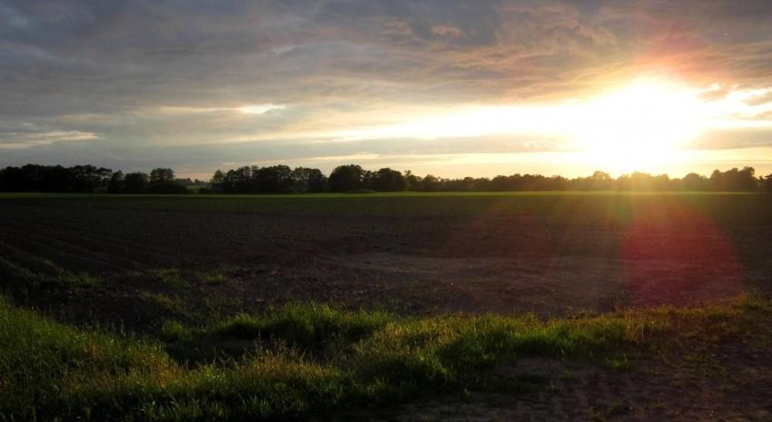 sale el sol campo
